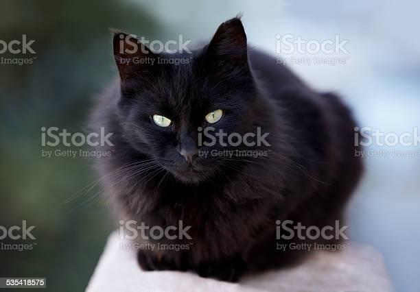 Cat on the prowl picture id535418575?b=1&k=6&m=535418575&s=612x612&h=iymtfcdkikodsaibm4u8fvvg4nmutenlc2iesvzouz0=