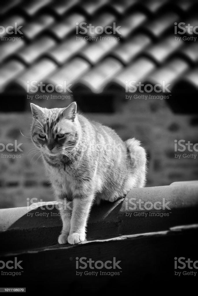 Gato en el último piso - foto de stock