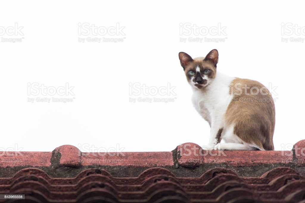 Cat on the roof stock photo