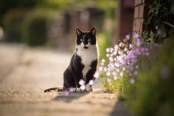 Cat on the sidewalk picture id1136163351?b=1&k=6&m=1136163351&s=612x612&w=0&h=dgqg2v1llzvqhkzojhk4mti9g xdxxfvm1hcvt4pk8e=