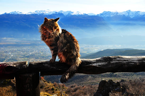 Cat on the summit of the mountain in argentina bolson picture id526568839?b=1&k=6&m=526568839&s=612x612&w=0&h=e5ofauyzo k9m5jdqkruzpaafxbhs5rq2xot7vtnk4q=