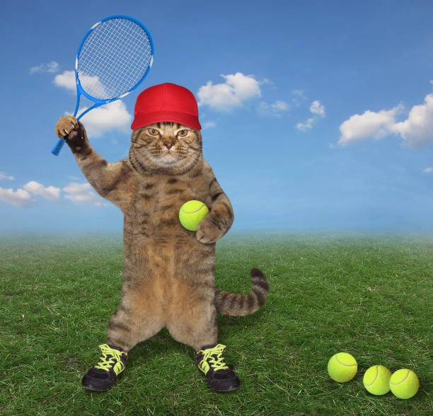 Cat on the tennis court stock photo