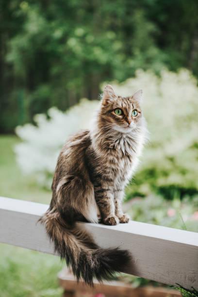 Katze auf der Terrasse – Foto