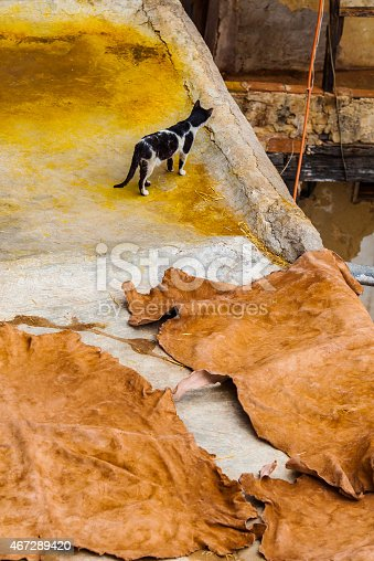 Black and white cat observing over a balcony, while yellow leather a drying