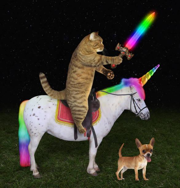 Cat on the unicorn near a dog picture id1030966916?b=1&k=6&m=1030966916&s=612x612&w=0&h=7w93jmrku4ozyxqaf9fq6dtyr59lvstmyhbuurxbxyy=