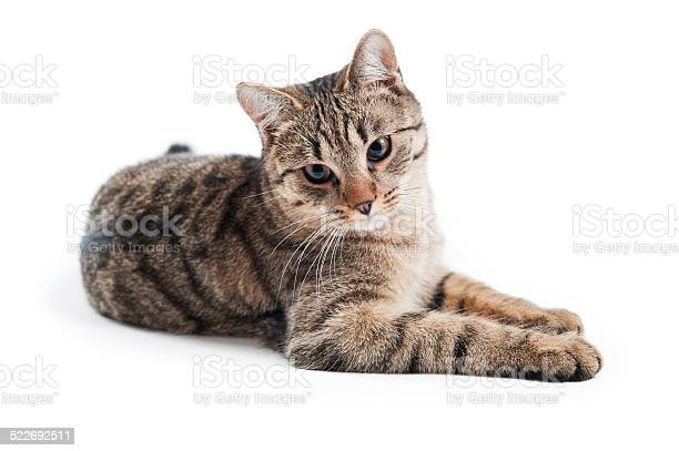 Cat on the white background picture id522692511?b=1&k=6&m=522692511&s=612x612&h=wdy fbyqxuqqa8rtn1duza7ae0lz18x ci9p8brnp98=