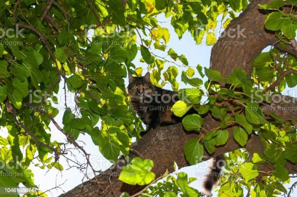 Cat on tree picture id1046168674?b=1&k=6&m=1046168674&s=612x612&h=1jit5emumxdj2wppql vj9lwc3hjuwr qfddqob7x8k=