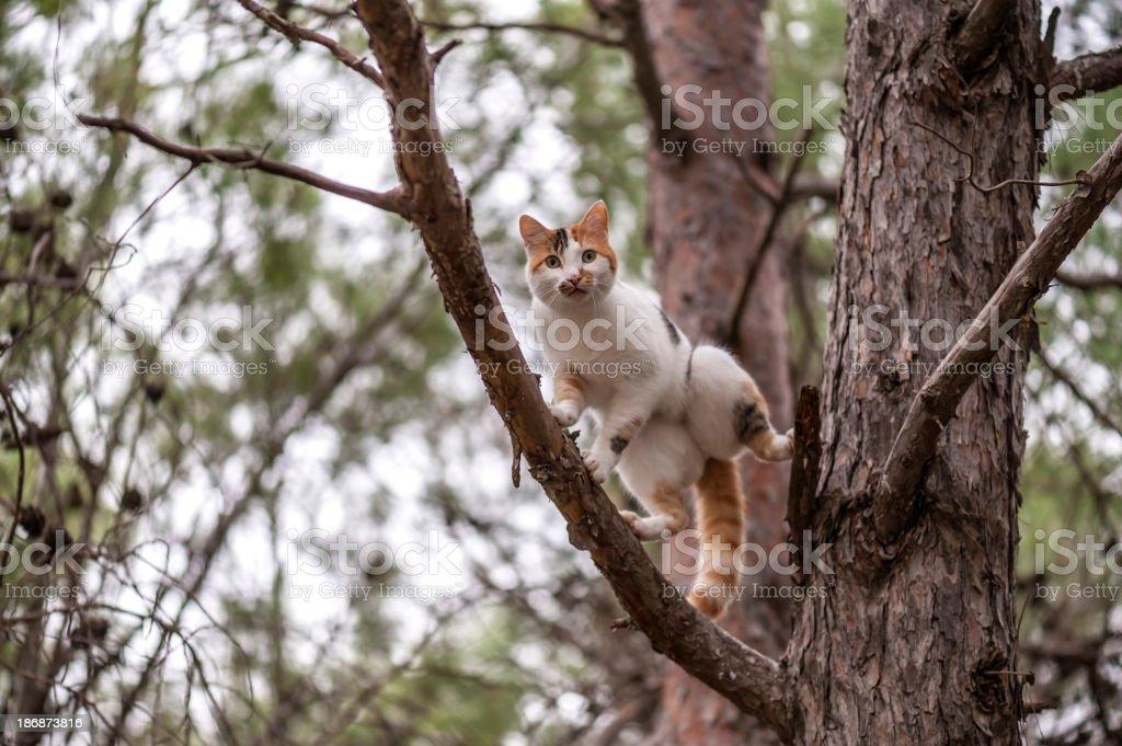 Cat on tree stock photo