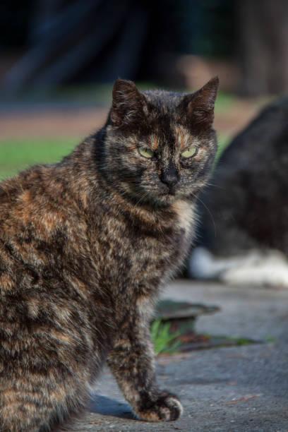 cat on via appia - batalina cats стоковые фото и изображения