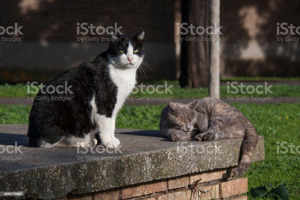 Cat on Via Appia стоковое фото