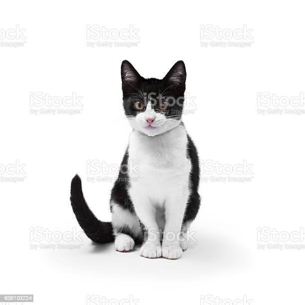 Cat on white picture id636103224?b=1&k=6&m=636103224&s=612x612&h=qdz4lufc fgtzcvat8l41u1bfostcpkrxgtuuvjyo k=