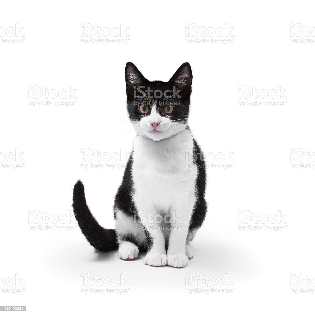 Cat en blanco - foto de stock