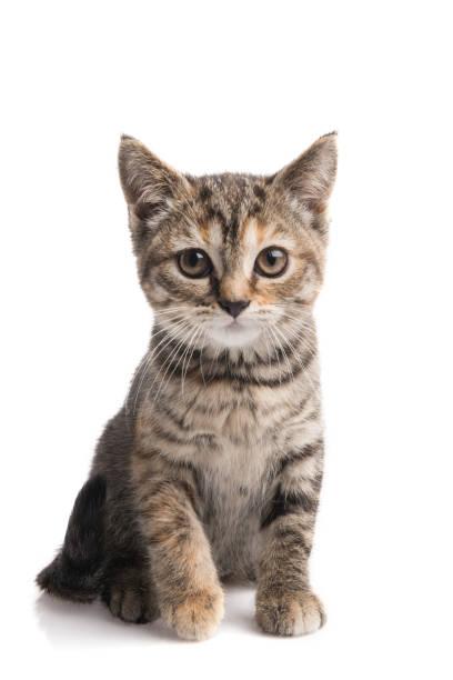 Cat on white picture id875172308?b=1&k=6&m=875172308&s=612x612&w=0&h=gsfgy hwckhamaz63kvnbudvxhkrq73rpvuaaxb sgo=