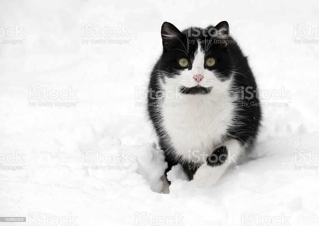 cat on white snow stock photo