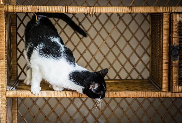 katze auf weidenmöbeln - katzenschrank stock-fotos und bilder