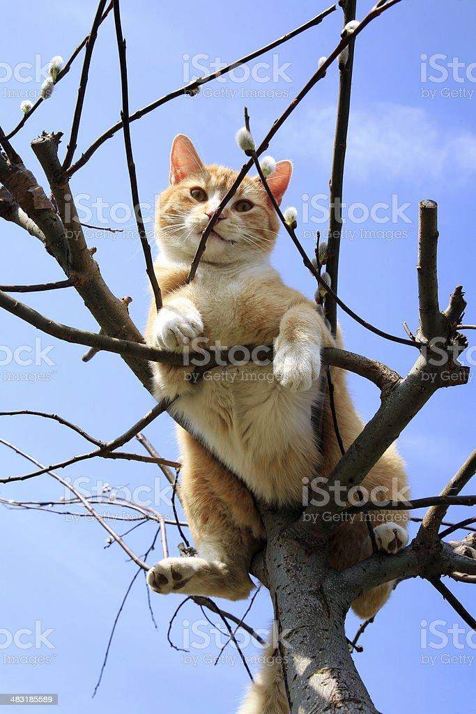 Cat on willow stock photo