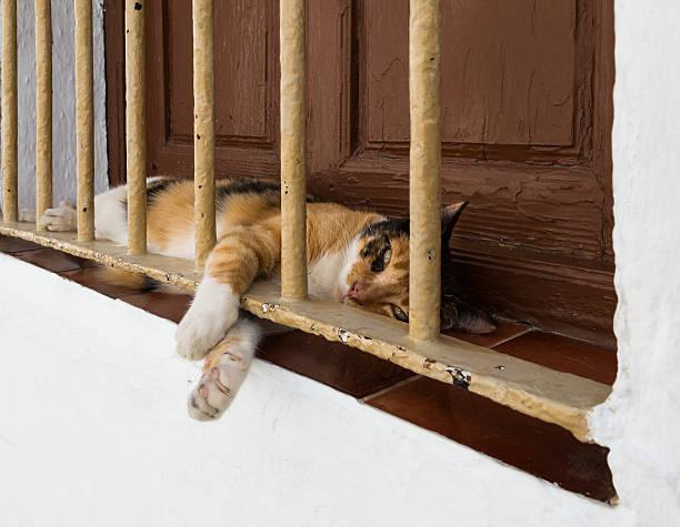 Cтоковое фото Кошка в окно Выступ