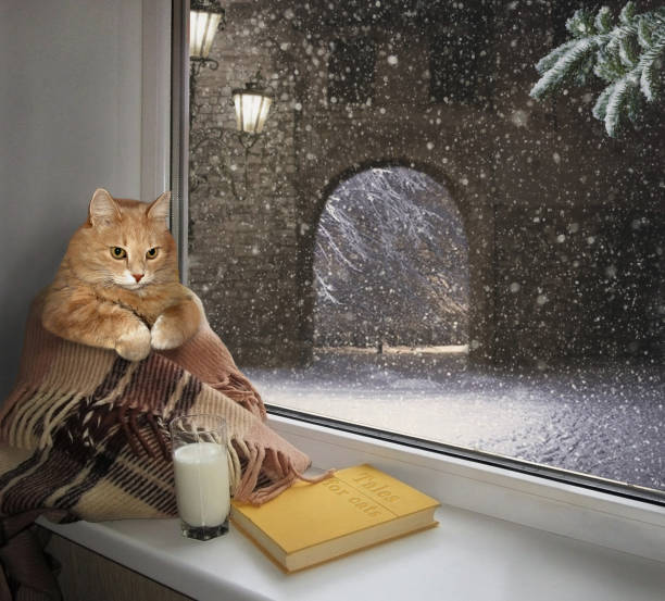 katze auf der fensterbank winter - humor bücher stock-fotos und bilder