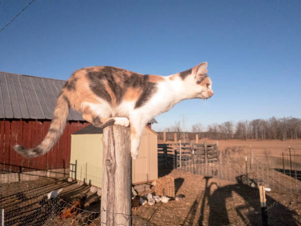 Cat on wooden post ready to jump picture id994730760?b=1&k=6&m=994730760&s=612x612&w=0&h=nj7qtcrenrud0mb0pcx4xy xkwkydghpwm2xwxaiake=