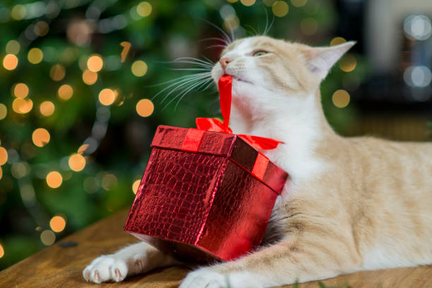 Cat Opening His Christmas Present stock photo