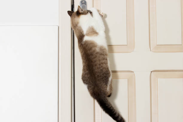 Katze öffnet die Tür – Foto