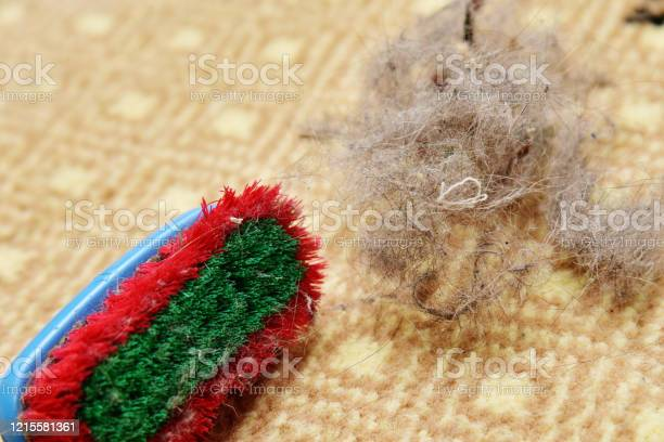 Cat or dog fur hair on the carpet picture id1215581361?b=1&k=6&m=1215581361&s=612x612&h=prjb4q7qphzqgl5eg kxsczo4w0dbni0a ij965c7f4=