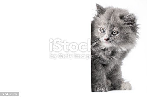 istock Cat or kitten isolated behind white wall 474179760