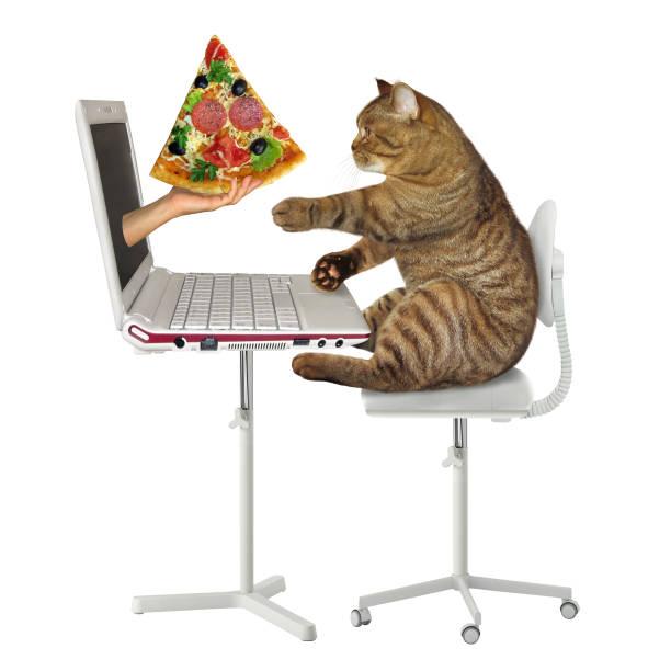 Cat orders pizza online picture id1138857637?b=1&k=6&m=1138857637&s=612x612&w=0&h=fpnwwtbhl8lwguu5itfgvvcnewiog75ze fobwsbqiq=