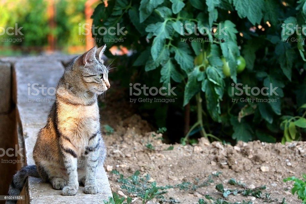 Cat Outdoor – Foto