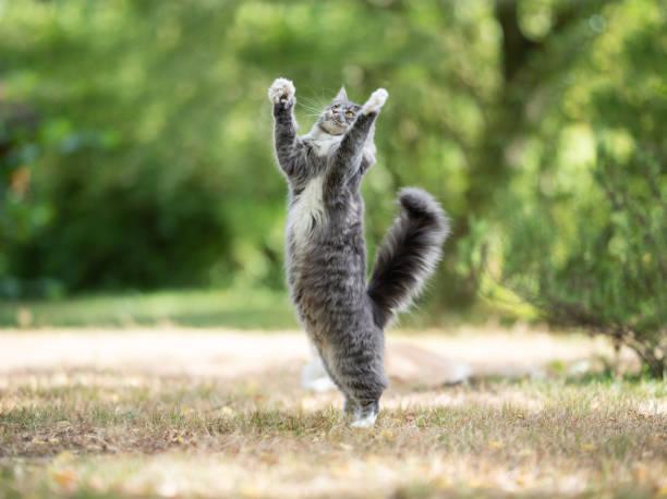 Cat outdoors picture id1167416526?b=1&k=6&m=1167416526&s=612x612&w=0&h=hqmb9evuqcvair40mbmghttabqjjvpjsclbmse4xnk0=