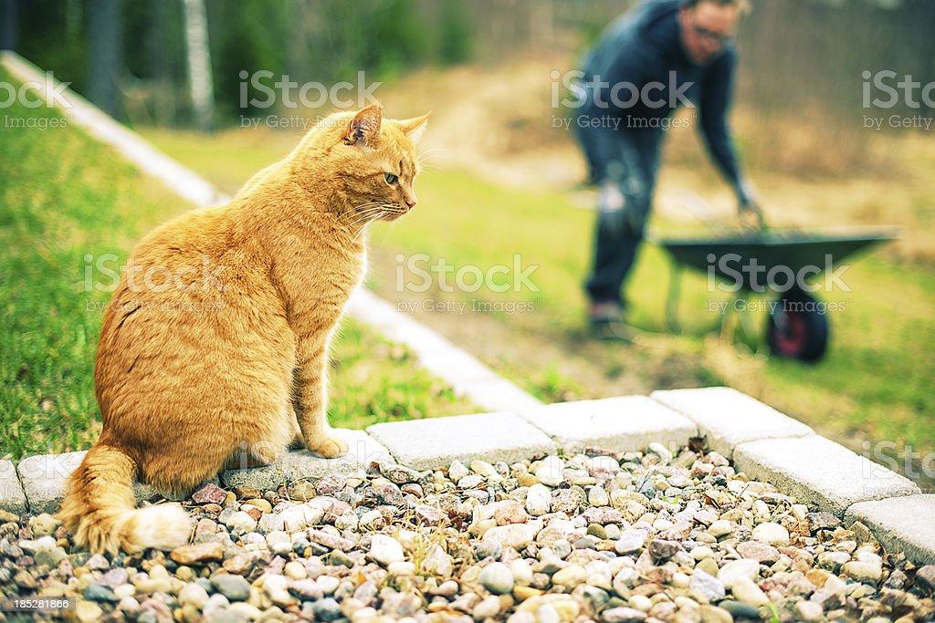 Cat outdoors royalty-free stock photo