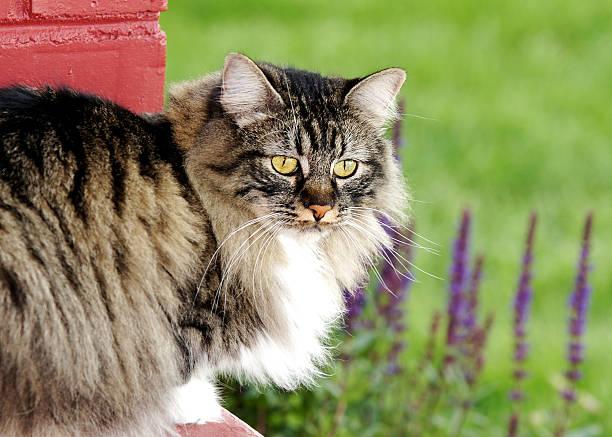 Cat outside in Garden stock photo