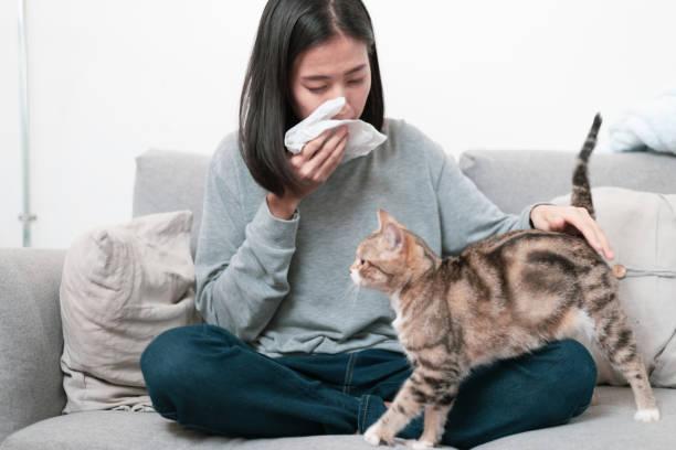 de eigenaar van de kat en haar kat, zittend op een bank. jonge aziatische vrouw heeft een lopende neus symptoom probleem omdat een kat allergie probleem. - allergie stockfoto's en -beelden