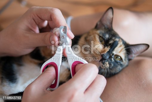 istock Cat owner or veterian is cutting kitten cat's nails as pet care grooming manicure 1148643753
