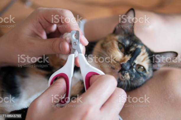 Cat owner or veterian is cutting kitten cats nails as pet care picture id1148643753?b=1&k=6&m=1148643753&s=612x612&h=jtytkv8bx7osd0qbnjr4bpjar32sjcjm6privbqm9kg=