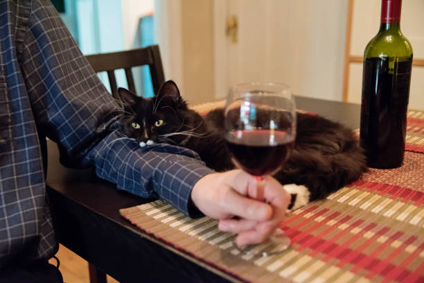 Cat participation at happy hour. stock photo