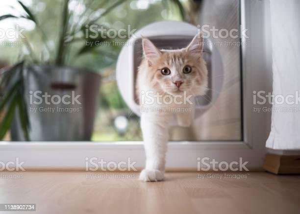 Cat passing through cat flap picture id1138902734?b=1&k=6&m=1138902734&s=612x612&h=jjtt hncek73fe2wglcwboxv5bbqnlr2br6u3thcg2y=