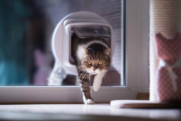 cat passing through catflap - going inside eye imagens e fotografias de stock
