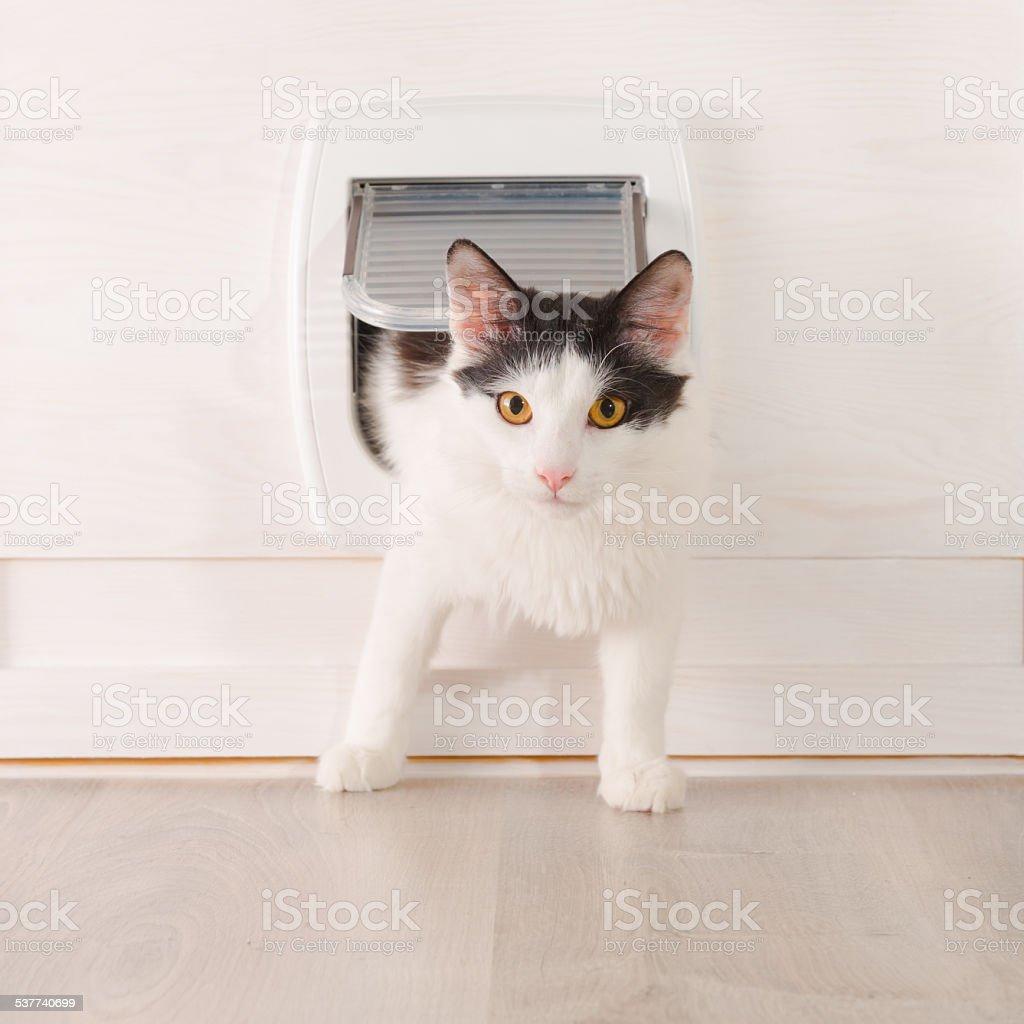 Cat passing through the cat door stock photo