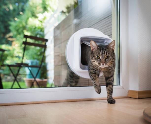 katt som passerar genom kattlucka - kattdjur bildbanksfoton och bilder