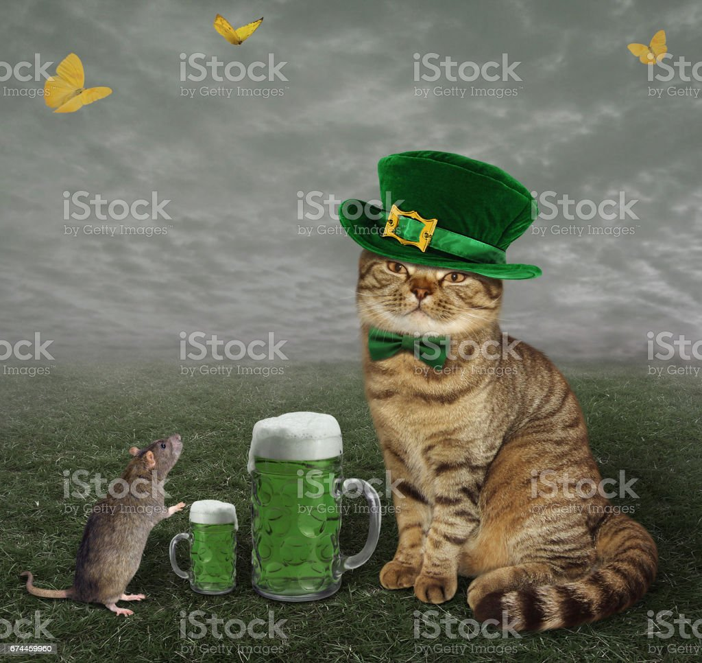 Cat patrick with beer and rat stock photo