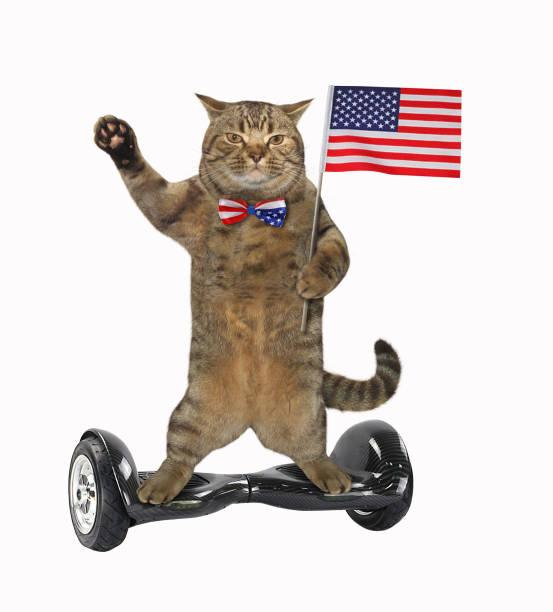 cat patriot 17 - fourth of july стоковые фото и изображения