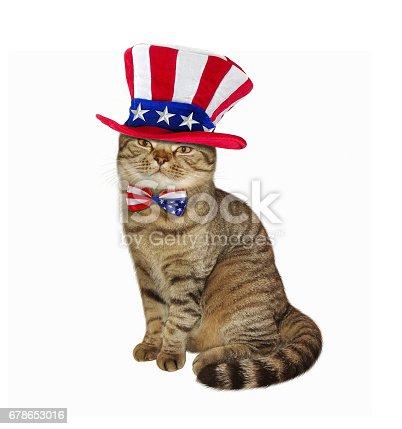 istock Cat patriot 2 678653016