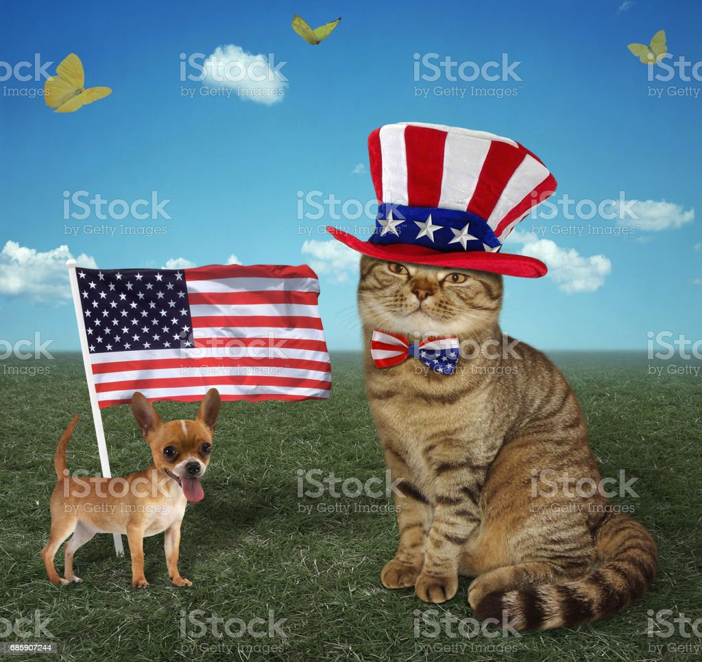 Cat patriot 3 stock photo