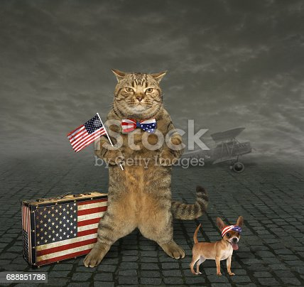 490776989 istock photo Cat patriot 4 688851786