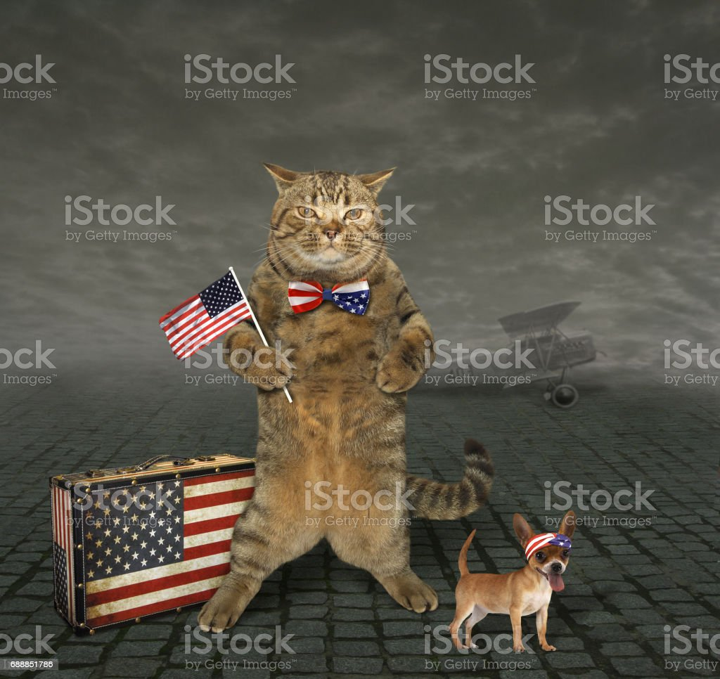 Cat patriot 4 stock photo