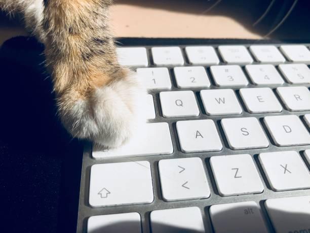 Cat paw on keyboard picture id1134114944?b=1&k=6&m=1134114944&s=612x612&w=0&h= iysmxm2szs4lhjjss1s0sdf2tgc9a6nbnfhfsw6t7k=