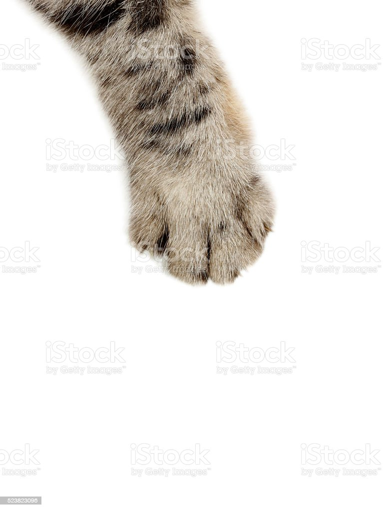 Cat paw on the white background stock photo