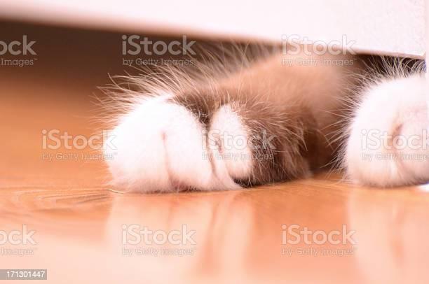 Cat paw picture id171301447?b=1&k=6&m=171301447&s=612x612&h=4iyqwympkuutmqgxo7blxpwelnsmiphbf ojxt4vdqa=