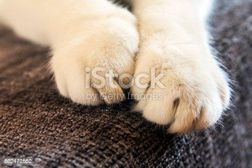 istock Cat paw 862472552